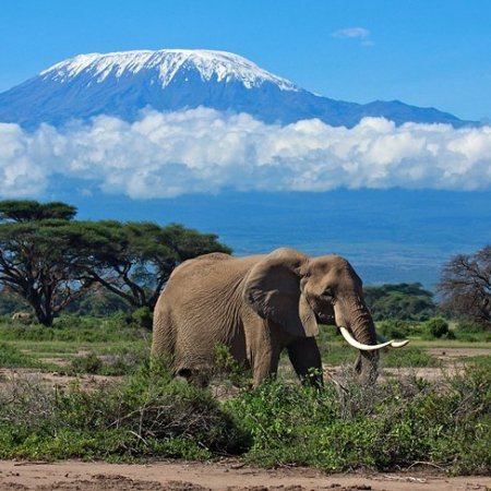 Top 7 Game Reserves in Africa